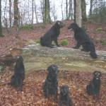 Skogspromenad 13/11 2007: Millie, Melvin, Wilma, Alfons, Viggo och Moltas