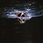 Dumle i vattnet
