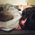 Stackars Einar försöker få plats i sin säng som är ockuperad av Herman och George