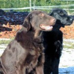 Monty & Inga