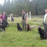 Från vänster: Kerstin och Lasse med Elvis, Anne och Alicia med Zingo och Puma, Jonas med Peter och Dumle, Håkan med Clinton.