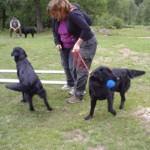 Lena och Anne ihopbundna, Zingo och Vera apporterar